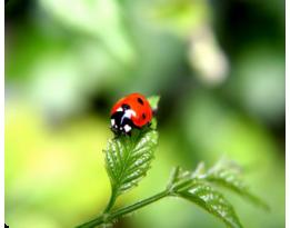 Ноу Хау в экологическом земледелии - Биодражирование семян.